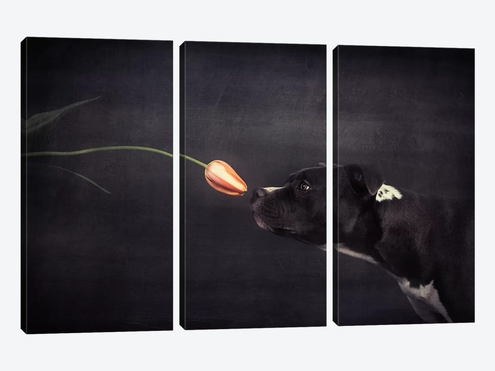 First Approach - Hildegard And The Tulip by Heike Willers 3-piece Canvas Wall Art
