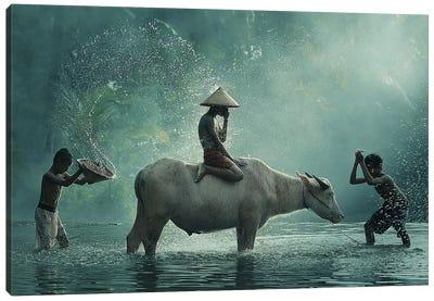 Water Buffalo Canvas Art Print