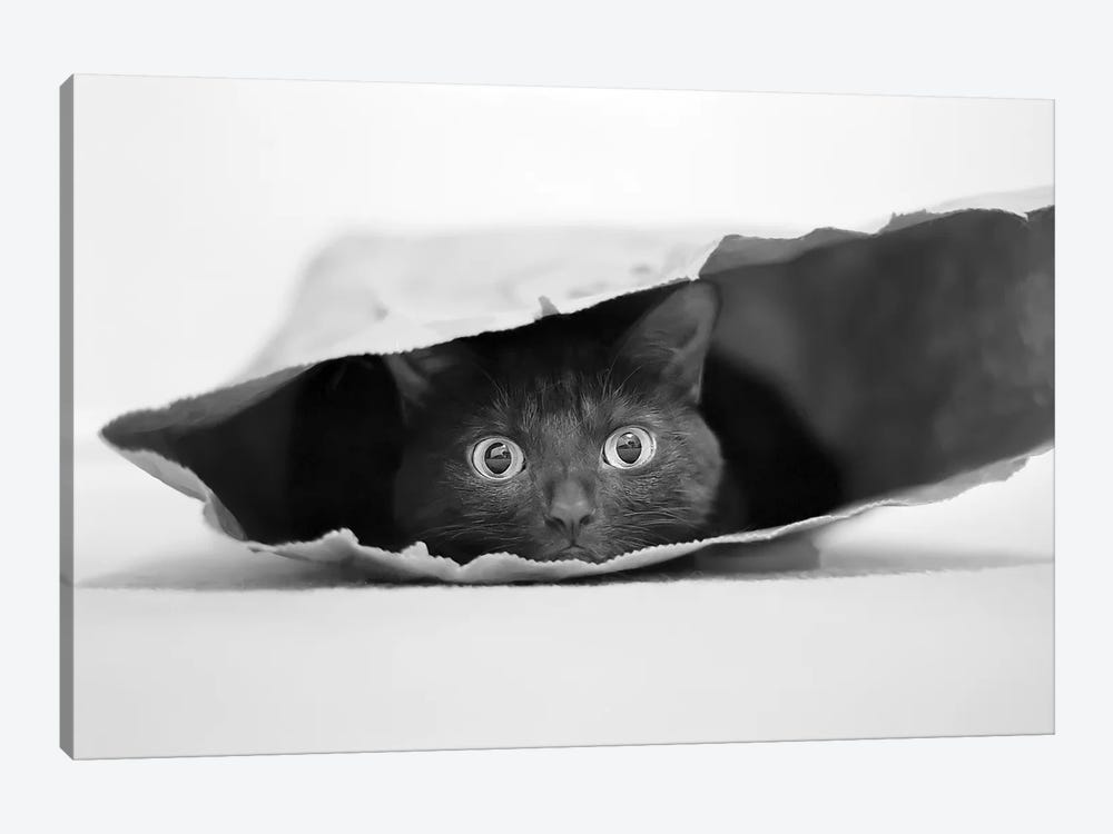 Cat In A Bag by Jeremy Holthuysen 1-piece Canvas Art