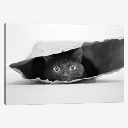 Cat In A Bag Canvas Print #OXM3063} by Jeremy Holthuysen Art Print