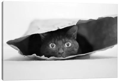 Cat In A Bag Canvas Art Print