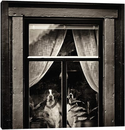 The Dogs I Canvas Art Print
