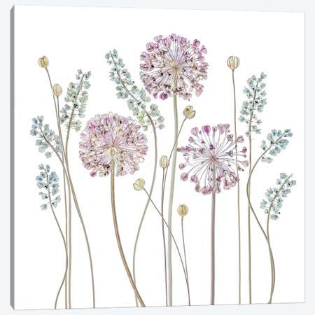 Allium 3-Piece Canvas #OXM3100} by Mandy Disher Canvas Art