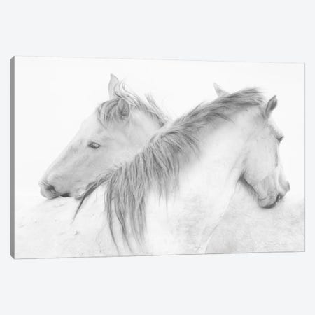 Horses Canvas Print #OXM3106} by Marie-Anne Stas Canvas Print