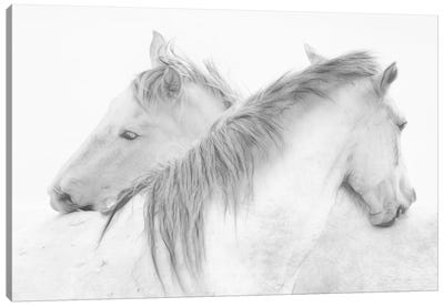 Horses Canvas Art Print