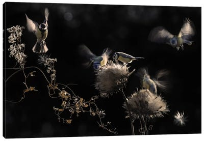 Artichokes' Hearts Canvas Art Print