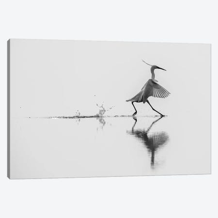 Dancing On The Water Canvas Print #OXM3124} by Mauro Rossi Art Print
