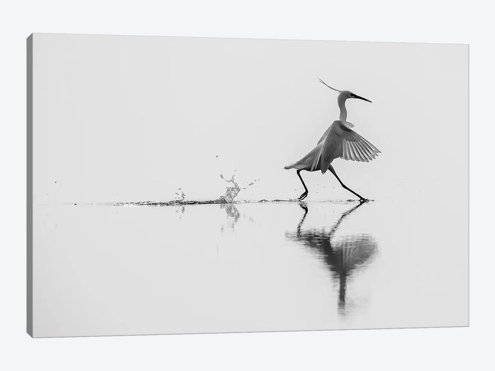 Dancing On The Water by Mauro Rossi 1-piece Canvas Art
