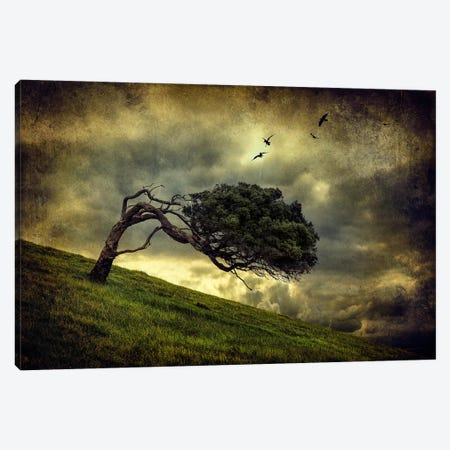 Winds Of Change Canvas Print #OXM312} by Peter Elgar Canvas Artwork
