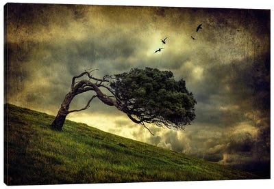Winds Of Change Canvas Art Print