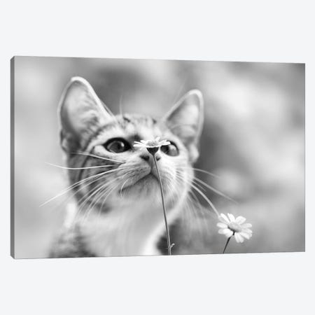 Curious 3-Piece Canvas #OXM3131} by Mirjam Delrue Canvas Print