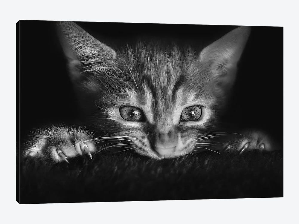 At The Movies by Monte Pi (10Catsplus) 1-piece Art Print