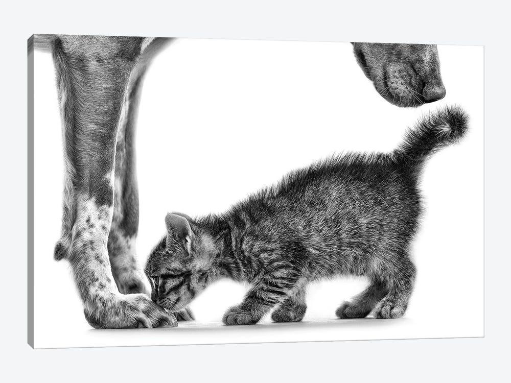 Smell Me by Monte Pi (10Catsplus) 1-piece Canvas Artwork