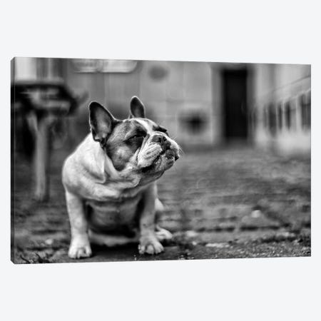 Dog Canvas Print #OXM3157} by Petr Canvas Artwork