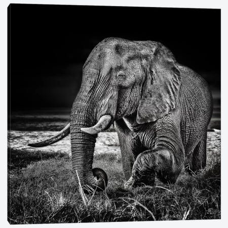 Sunset At The Waterhole Canvas Print #OXM3163} by Piet Flour Canvas Artwork