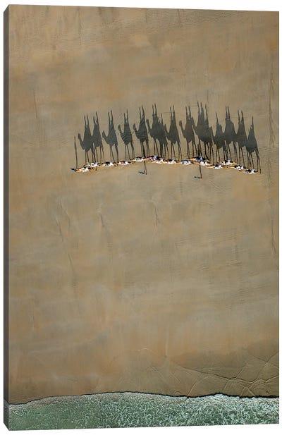 Broome Camel Train Canvas Art Print