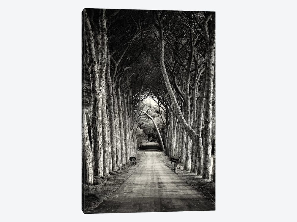 Untitled by Sandra 1-piece Canvas Art