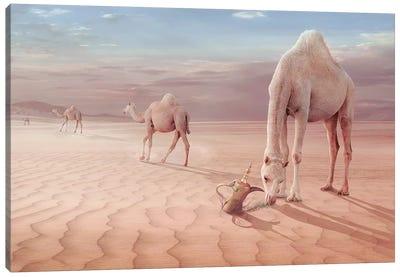 Camel's Trip Canvas Art Print