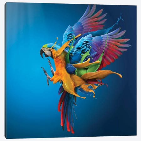 Flying Colours Canvas Print #OXM3200} by Sulaiman Almawash Canvas Print