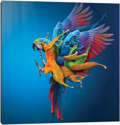 Flying Colours Canvas Art Print