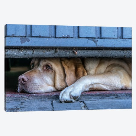Street Watcher Canvas Print #OXM3207} by Susanne Stoop Canvas Art