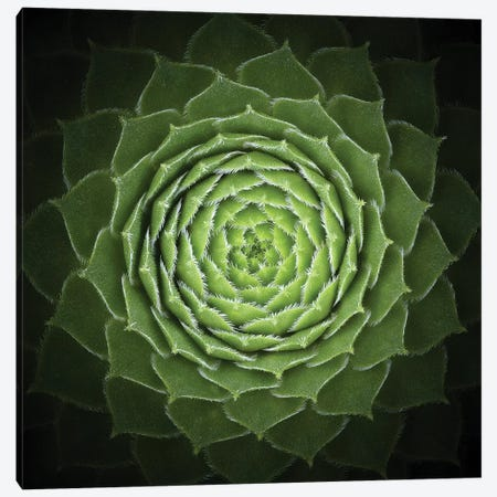 Succulent Canvas Print #OXM3226} by Victor Mozqueda Canvas Wall Art