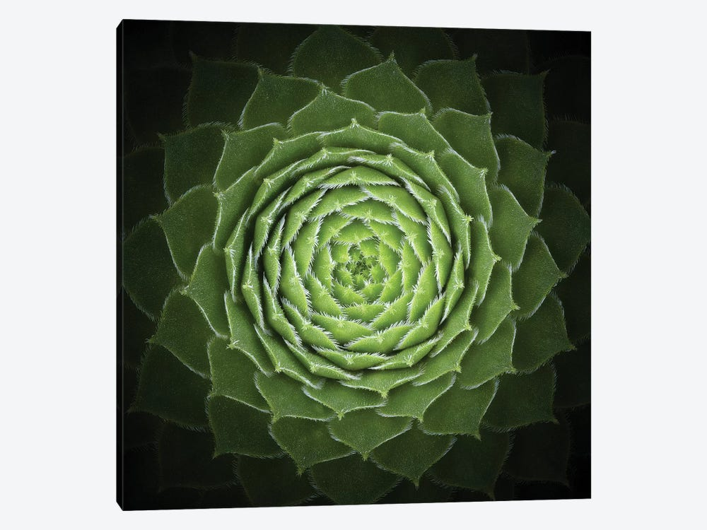 Succulent 1-piece Canvas Art