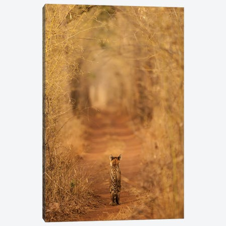 The Tiger In The Tunnel Canvas Print #OXM3242} by Ab Apana Art Print
