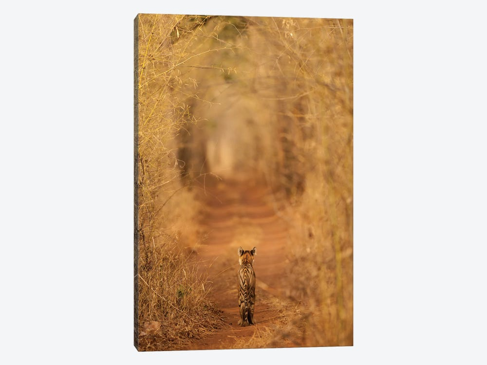 The Tiger In The Tunnel by Ab Apana 1-piece Canvas Artwork