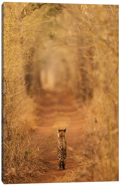 The Tiger In The Tunnel Canvas Art Print