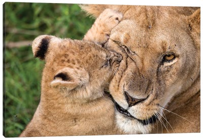 Mother Love Canvas Art Print