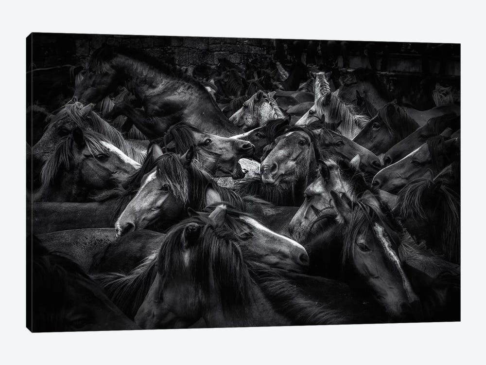 Acorralados by Alfonso Maseda Varela 1-piece Canvas Artwork