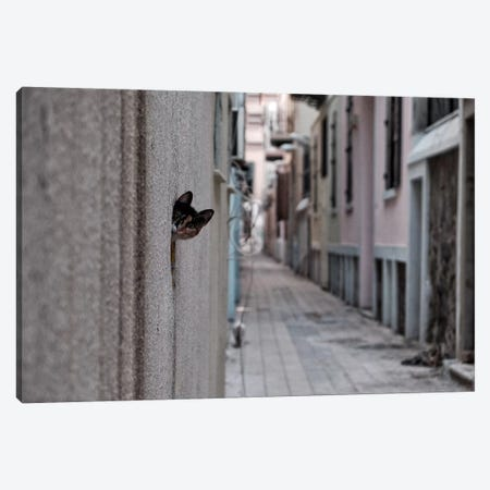 Dantel Street Cat Canvas Print #OXM3274} by Ali Ayer Canvas Print