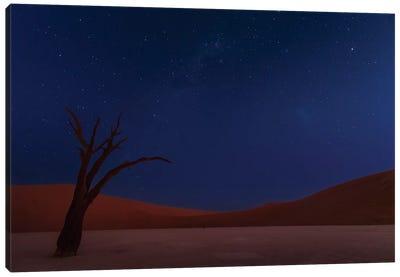 Stars And Dunes Canvas Art Print
