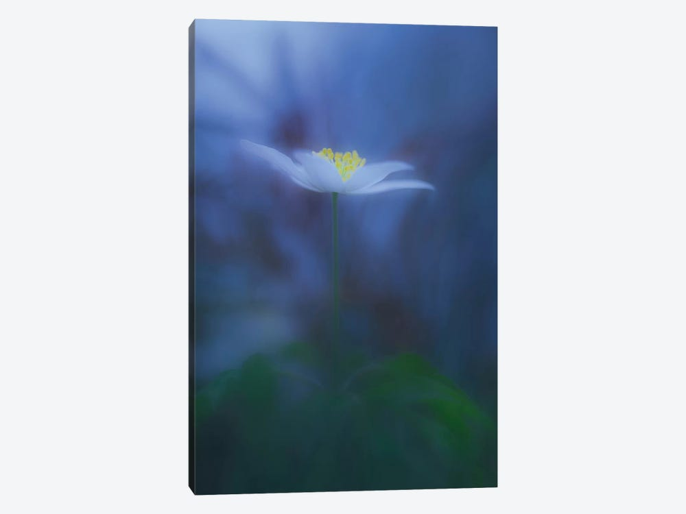 Wood Anemone 1-piece Canvas Wall Art