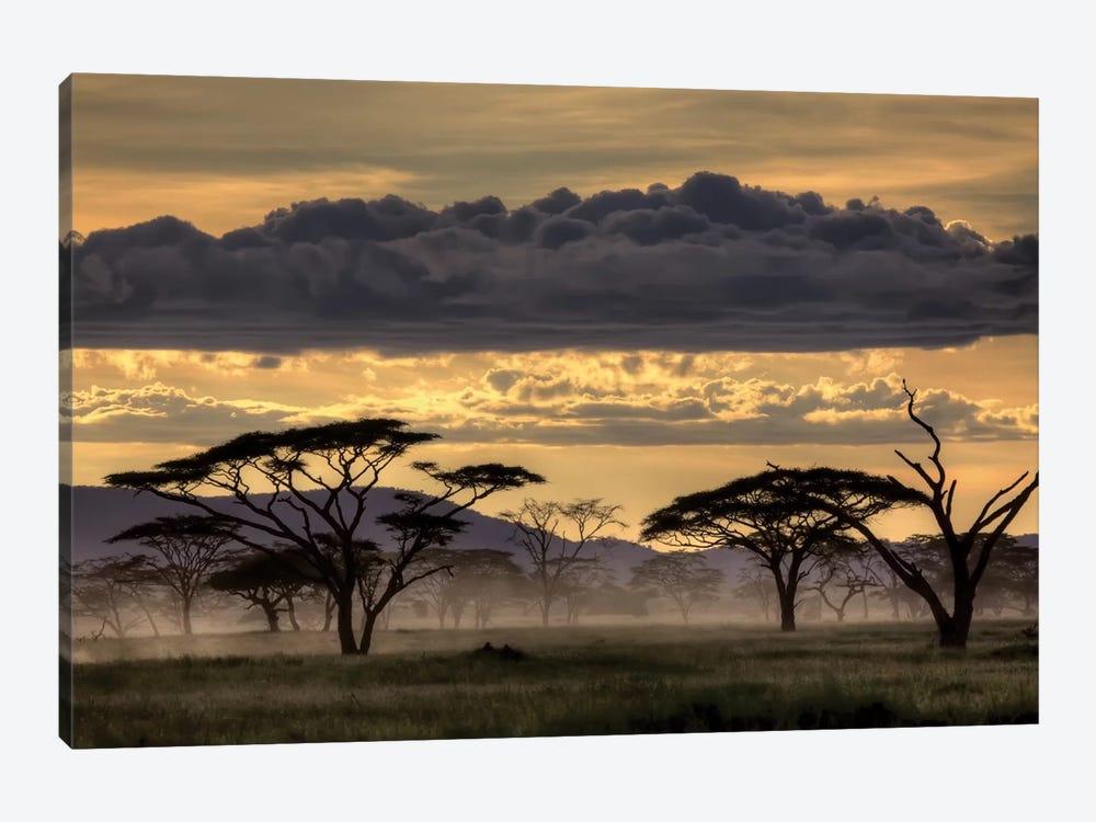Good Evening Tanzania by Amnon Eichelberg 1-piece Art Print