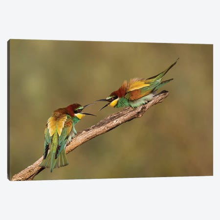 The Territory 3-Piece Canvas #OXM3286} by Amnon Eichelberg Canvas Wall Art