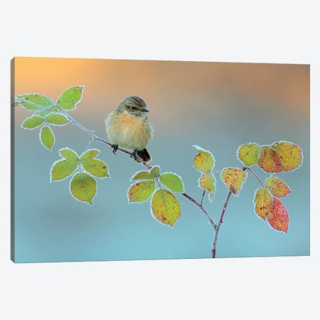 Winter Colors Canvas Print #OXM3291} by Andres Miguel Dominguez Canvas Art