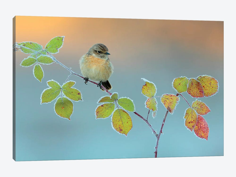 Winter Colors by Andres Miguel Dominguez 1-piece Canvas Wall Art