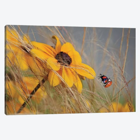 Colors Of Summer Canvas Print #OXM3301} by Anna Cseresnjes Canvas Artwork
