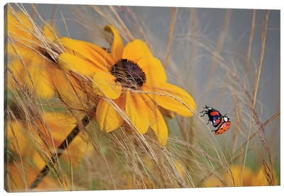 Colors Of Summer Canvas Art Print