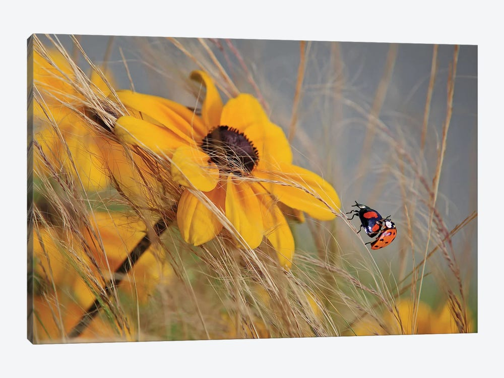 Colors Of Summer by Anna Cseresnjes 1-piece Canvas Artwork
