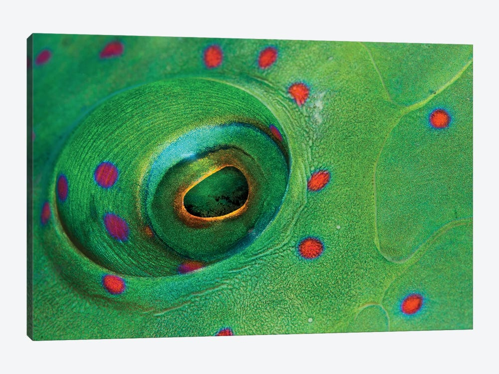 Fish Eye by Anna Shvab 1-piece Canvas Artwork