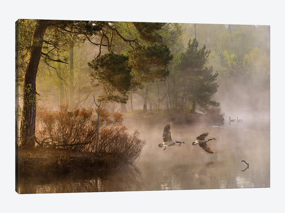 Goose Fight by Anton van Dongen 1-piece Canvas Artwork