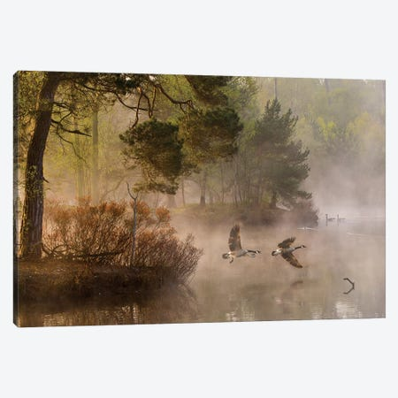 Goose Fight Canvas Print #OXM3310} by Anton van Dongen Art Print