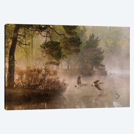 Goose Fight Canvas Print #OXM3310} by Anton van Dongen Art Print