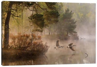 Goose Fight Canvas Art Print