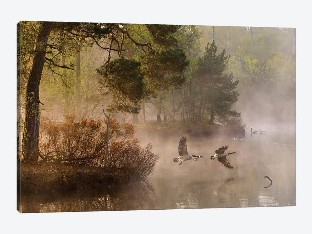 Goose Fight by Anton van Dongen 1-piece Canvas Artwork