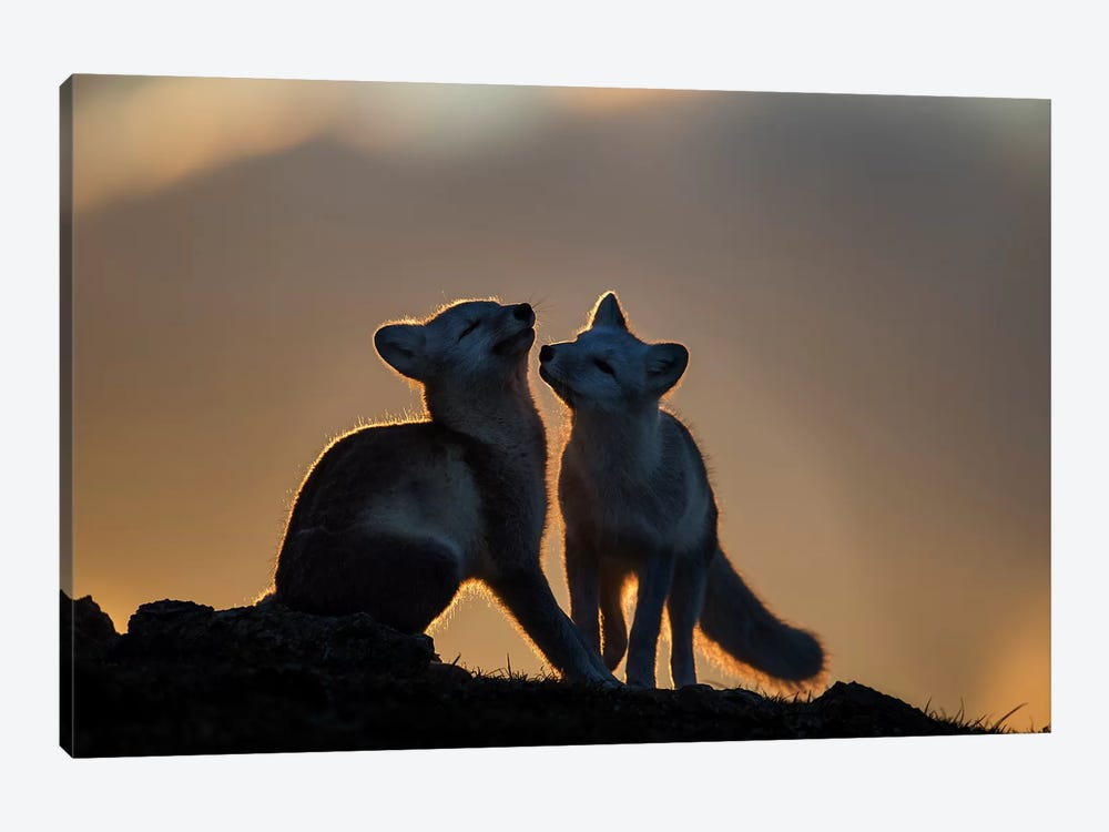 Arctic Fox by Arne K Mala 1-piece Canvas Artwork