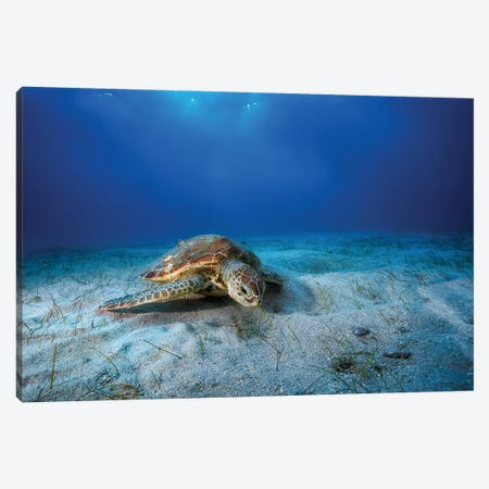 Green Turtle In The Blue Canvas Print #OXM3325} by Barathieu Gabriel Art Print
